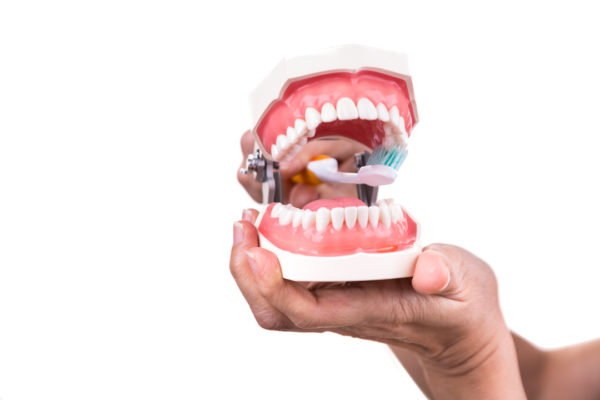 Dental prosthetists answers the question 'Can you brush dentures while in your mouth?' by demonstrating on dentures.